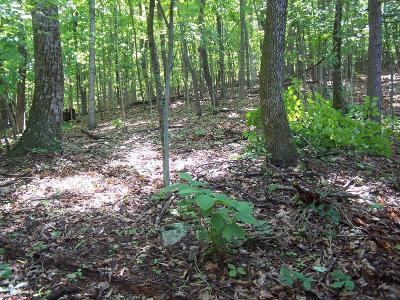 Blue Ridge Residential Lots & Land For Sale: Old Sawmill Rd