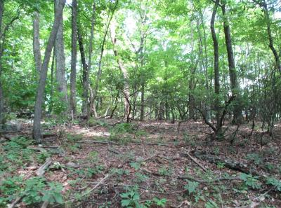 Blue Ridge Residential Lots & Land For Sale: Lot 3 Fosters Knob Rd