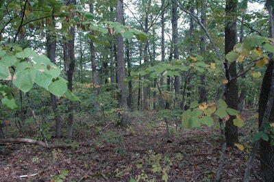 Roanoke City County Residential Lots & Land For Sale: 3645 Rutrough Rd SE