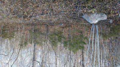 Troutville VA Residential Lots & Land For Sale: $37,500