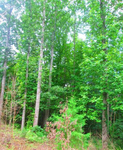 Bedford Residential Lots & Land For Sale: Parcel 2 Candle Ln