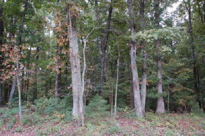 Roanoke County Residential Lots & Land For Sale: Mountain Valley Rd