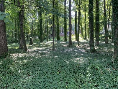 Roanoke City County Residential Lots & Land For Sale: Rosalind Ave SW