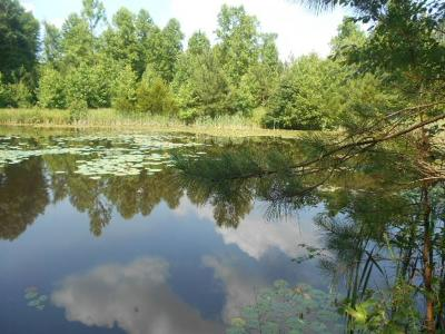Charlotte County Residential Lots & Land For Sale: Terry Lane