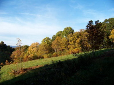 Hillsville Residential Lots & Land For Sale: Tbd Bent Nail Road