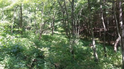 Carroll County, Grayson County Residential Lots & Land For Sale: Tbd Hines Branch Road