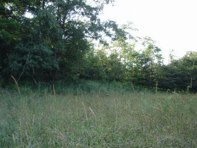 Whitetop Residential Lots & Land For Sale: Tbd Whitetop Gap Road (Lot 4)