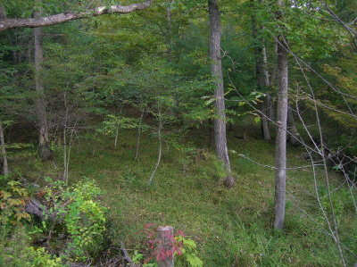 Wytheville Residential Lots & Land For Sale: Tbd Smith Hollow Rd