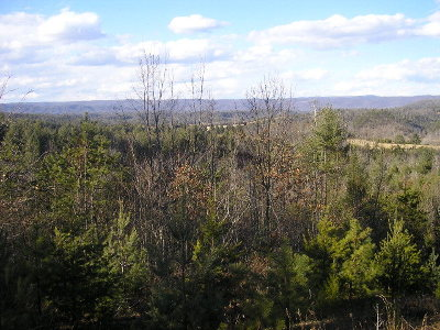 Bland Residential Lots & Land For Sale: Tbd Burton's Pond Road