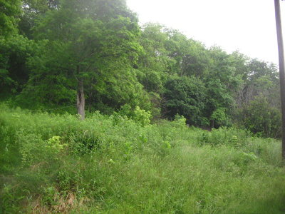 Max Meadows Residential Lots & Land For Sale: 1205 Ramsey Mountain Road