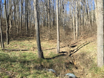 Max Meadows Residential Lots & Land For Sale: Tbd Cartersville Heights Rd