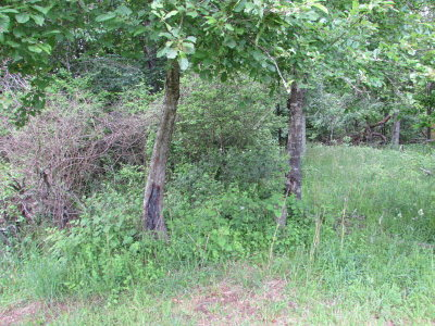 Wytheville Residential Lots & Land For Sale: Lot 40 Cherry Blossom Lane