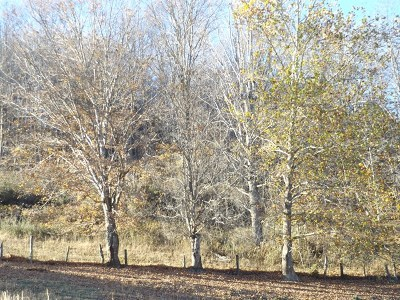 Saltville Residential Lots & Land For Sale: 960 Possum Hollow Rd