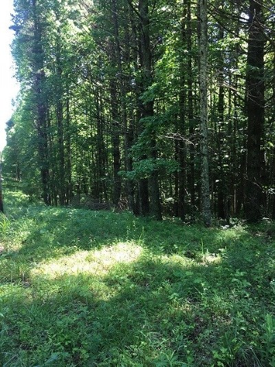 Galax VA Residential Lots & Land For Sale: $20,000