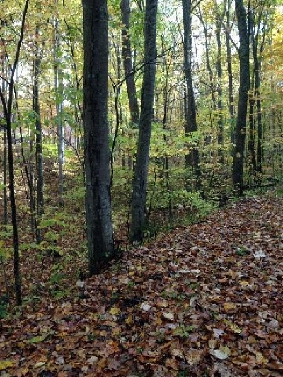 Bland Residential Lots & Land For Sale: Tbd Big Ridge Ln.