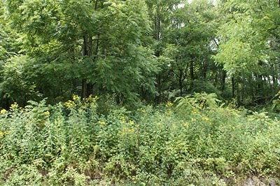 Max Meadows Residential Lots & Land For Sale: Tbd Rickey Rd