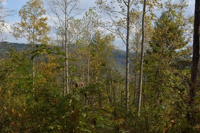 Grayson County Residential Lots & Land For Sale: Tbd Tbd Knob Fork Ln