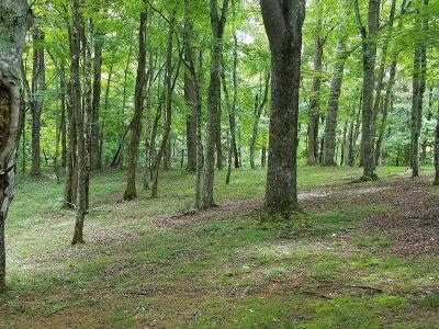 Grayson County Residential Lots & Land For Sale: 808 Serenity Trl