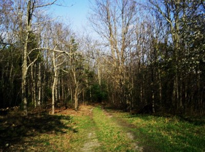 Max Meadows Residential Lots & Land For Sale: 359 Fox Mountain Road