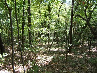 Abingdon Residential Lots & Land For Sale: Tbd North Fork River Rd Lot 12