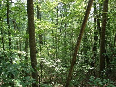 Abingdon Residential Lots & Land For Sale: Tbd North Fork River Rd Lot 24