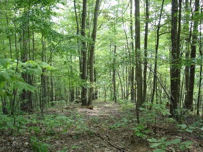 Abingdon Residential Lots & Land For Sale: Tbd North Fork River Rd Lot 25