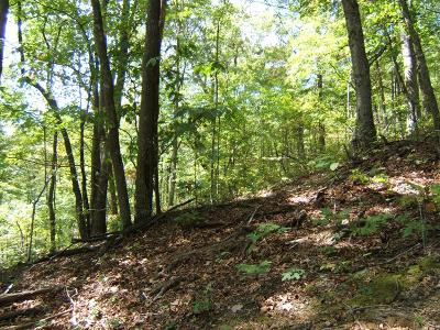 Abingdon Residential Lots & Land For Sale: Tbd North Fork River Rd Lot 31