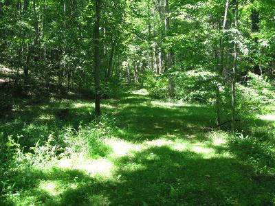 Carroll County, Grayson County Residential Lots & Land For Sale: Tbd Moorewood Lane