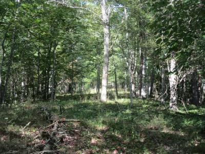 Grayson County Residential Lots & Land For Sale: Tbd Old River Lane
