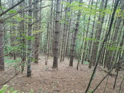 Woodlawn VA Residential Lots & Land For Sale: $74,900