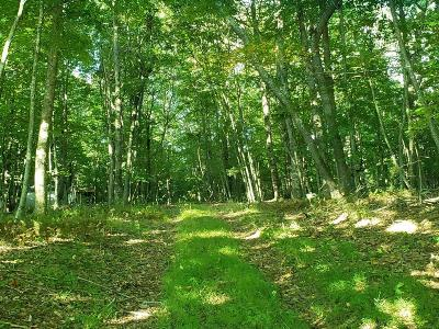 Galax Residential Lots & Land For Sale: Tbd End Of The Lane