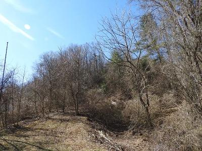 Galax Residential Lots & Land For Sale: Tbd Bedsaul Hollow Rd