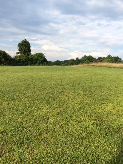 Galax, Woodlawn, Hillsville, Fries Residential Lots & Land For Sale: 456 Little Bit Rd