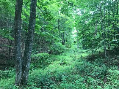 Galax Residential Lots & Land For Sale: Tbd Pridemoore Rd