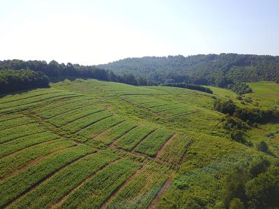 Carroll County, Grayson County Residential Lots & Land For Sale: Tbd Kenmore
