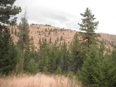 Chelan Residential Lots & Land For Sale: Lot # 11 Washington Creek Rd