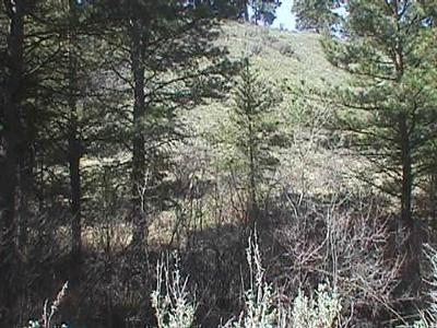 East Wenatchee Residential Lots & Land For Sale: 113 Wild Turkey