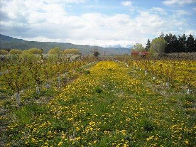 Wenatchee Farm & Ranch For Sale: Easy Street