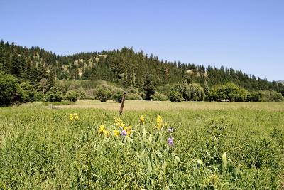 Residential Lots & Land Sold: 18132 Chumstick Hwy