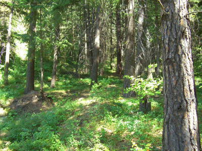 Leavenworth Residential Lots & Land For Sale: 16883 Chumstick Hwy