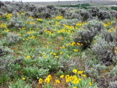East Wenatchee Residential Lots & Land For Sale: Nna Lot 3 Chipmunk Trail Road