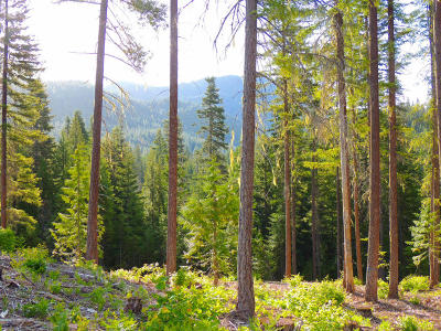 Leavenworth WA Residential Lots & Land For Sale: $159,000