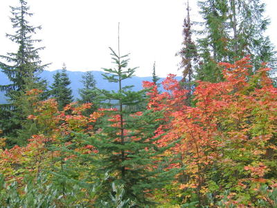 Leavenworth Residential Lots & Land For Sale: Nna Packer Pole Fs 6304 Rd