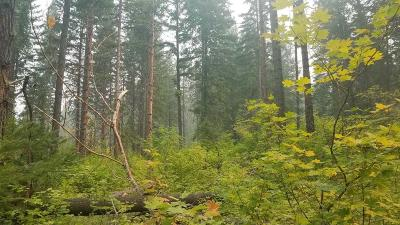 Leavenworth Residential Lots & Land For Sale: 19775 Wa-207