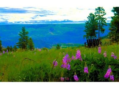 Chelan Residential Lots & Land For Sale: 850 Blazing Star Ln