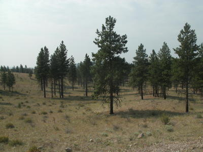 Chelan Residential Lots & Land For Sale: Nna Evergreen Camp Road Parcel D