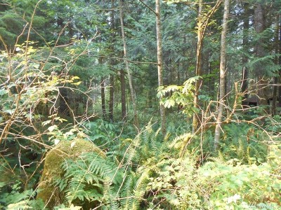 Glacier WA Residential Lots & Land For Sale: $47,995