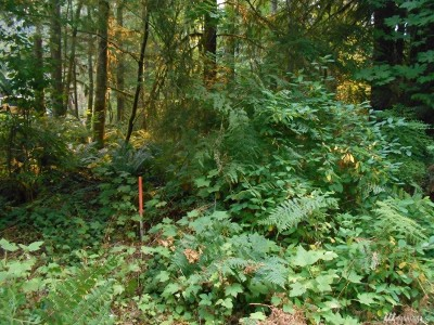 Glacier WA Residential Lots & Land For Sale: $46,995