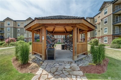 Bellingham Condo/Townhouse For Sale: 680 32nd St #C204