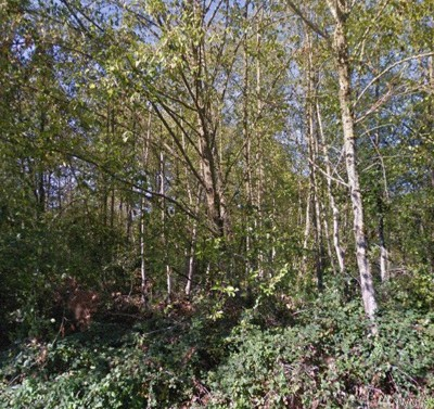 Snohomish County Residential Lots & Land For Sale: 17020 13th Ave W